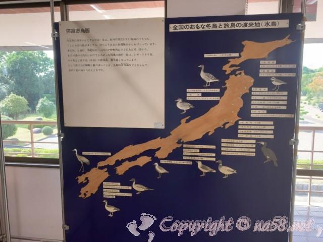 弥富野鳥園(愛知県弥富市)の2階、全国の主な冬鳥と旅鳥の渡来地(水鳥)
