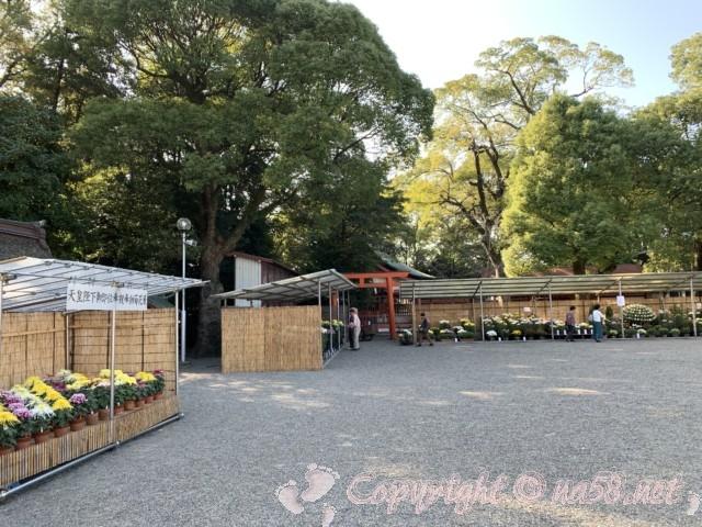 津島神社(愛知県津島市)の菊花展