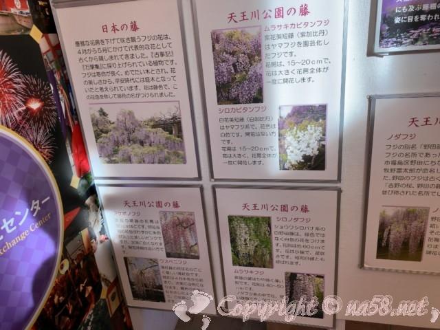 津島の天王川公園の藤まつりについて