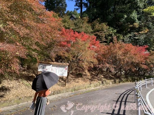 小原四季桜まつり(愛知県豊田市)四季の回廊ウォーキング、泥ぶち観音からの道紅葉