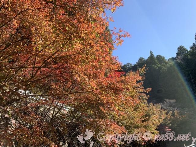 小原四季桜まつり(愛知県豊田市)四季の回廊ウォーキング、西運寺付近の紅葉
