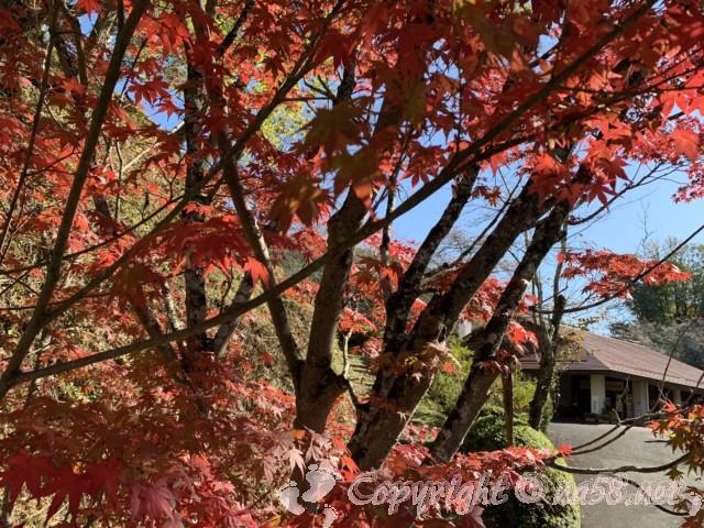 「小原四季桜まつり」(愛知県豊田市)の和紙のふるさと、和紙工芸館と紅葉