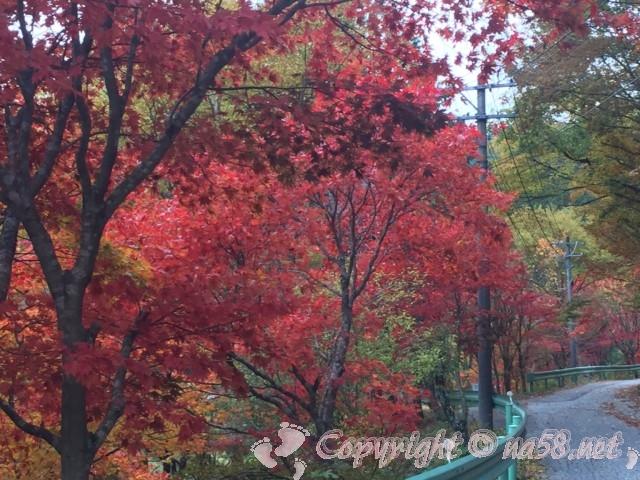 道の駅つぐ高原グリーンパーク(愛知県設楽町)の付近の紅葉