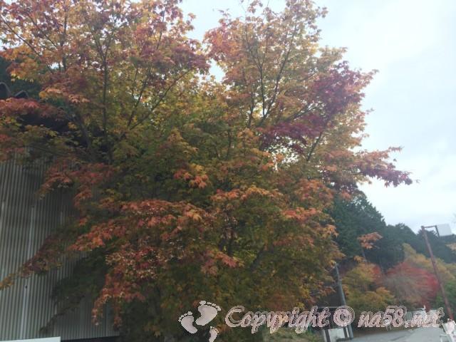 道の駅つぐ高原グリーンパーク(愛知県設楽町)の付近の紅葉、駐車場