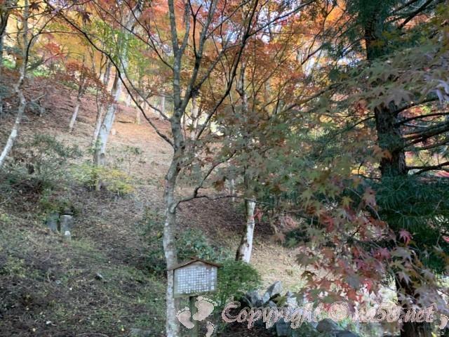 大井平公園(豊田市稲武町)の紅葉の風景