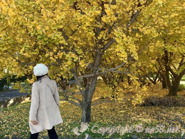 そぶえイチョウ黄葉まつり、山崎駅付近のイチョウ