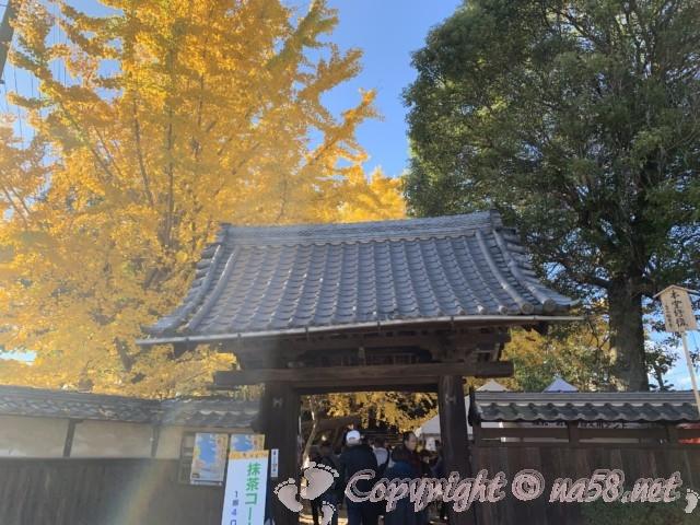 そぶえイチョウ黄葉まつり、祐専寺の門と樹齢300年の銀杏