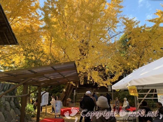 そぶえイチョウ黄葉まつり、祐専寺の境内、黄金色の銀杏と茶席