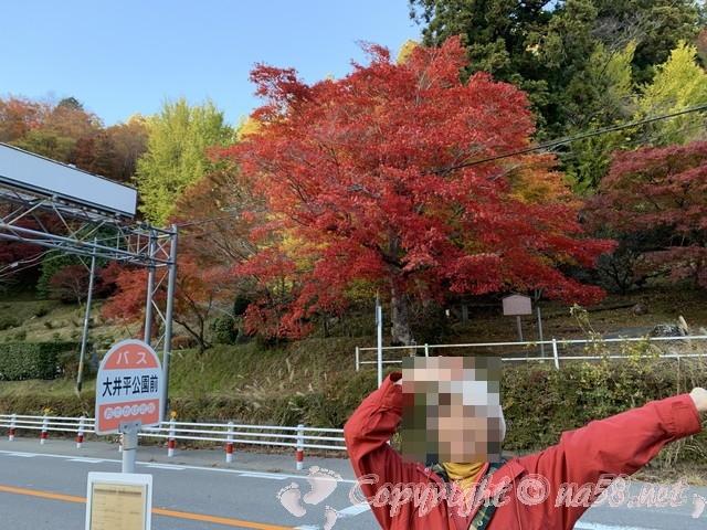 大井平公園(豊田市稲武町)のバス停付近の紅葉