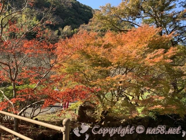 熱海梅園(静岡県熱海市)のもみじまつり、見ごろ