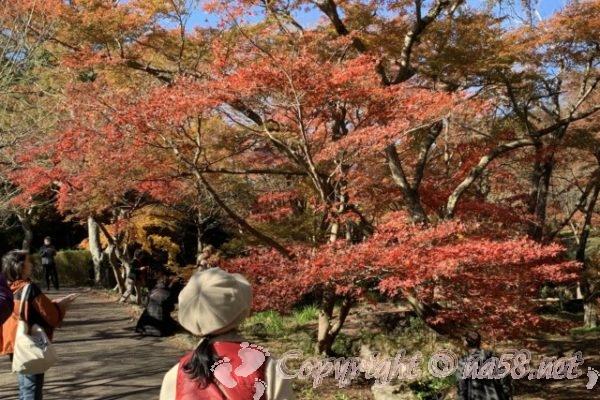 「熱海梅園」紅葉(もみじまつり)2019/期間/ライトアップと駐車場(静岡県)