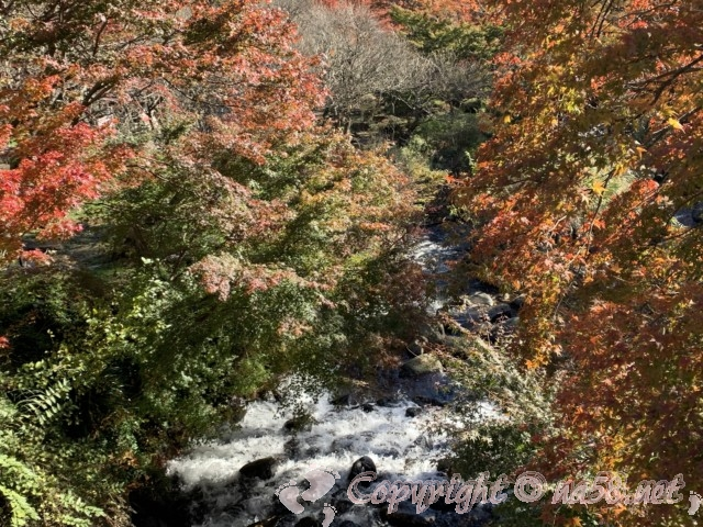 熱海梅園(静岡県熱海市)のもみじまつり、見ごろ紅葉