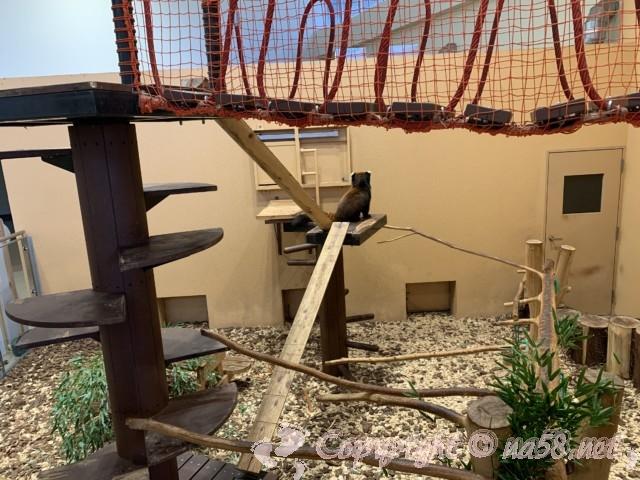 静岡市立日本平動物園(静岡県静岡市)レッサーパンダの繁殖研究をしている