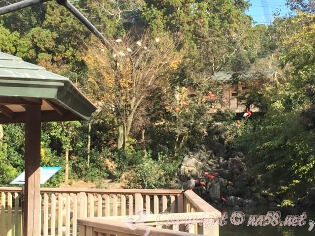 静岡市立日本平動物園(静岡県静岡市)フライングメガドームの鳥たち