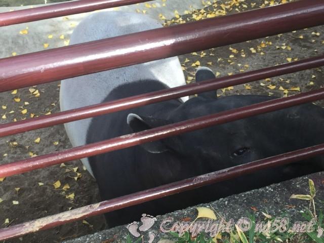 静岡市立日本平動物園(静岡県静岡市)アリクイ
