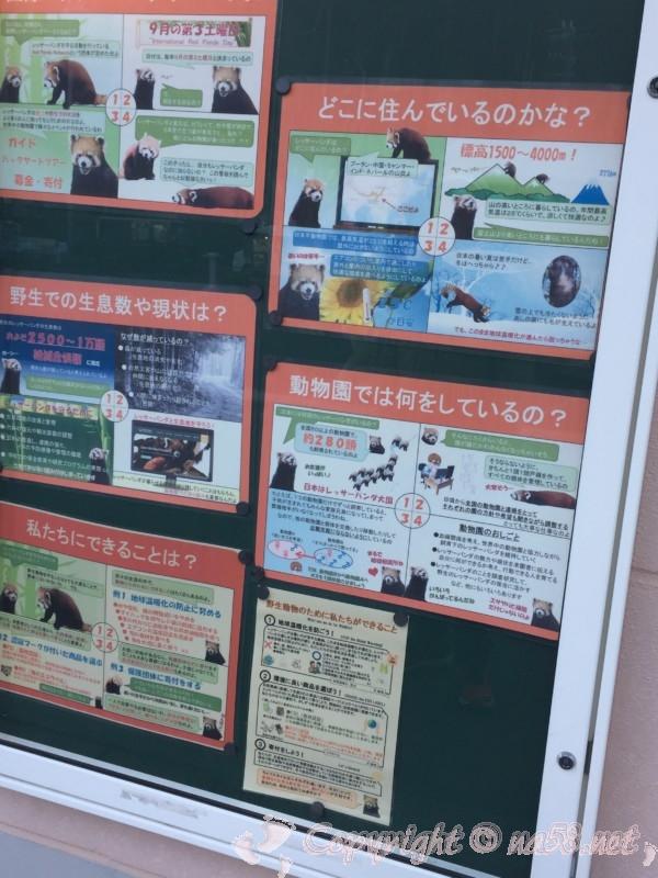 静岡市立日本平動物園(静岡県静岡市)レッサーパンダの生活についての解説