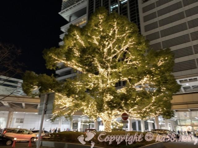 名古屋駅のクリスマスイルミネーションで飾られたブロッコリー