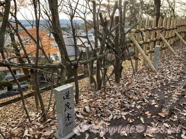 明智城址(岐阜県可児市)の逆茂木