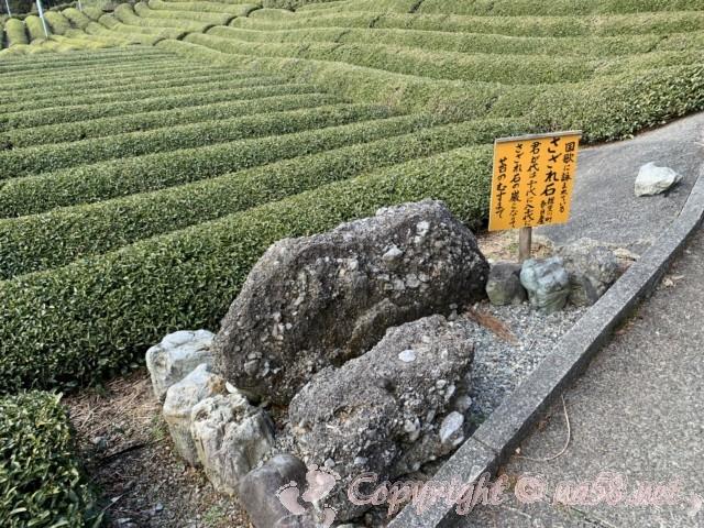 岐阜のマチュピチュ、天空の茶畑(岐阜県揖斐郡揖斐川町春日六合)へ散策開始、さざれ石