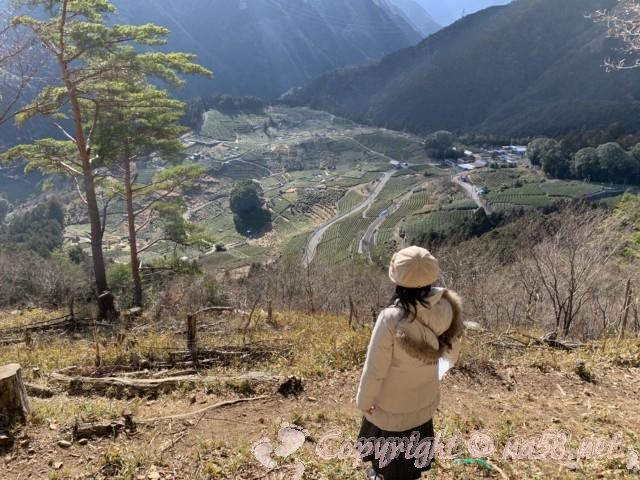 岐阜のマチュピチュ、天空の茶畑(岐阜県揖斐郡揖斐川町春日六合)の絶景スポットAからの景観