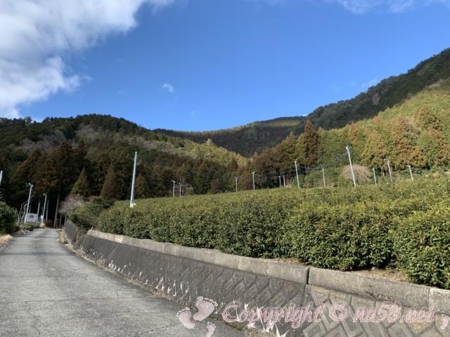 岐阜のマチュピチュ、天空の茶畑(岐阜県揖斐郡揖斐川町春日六合)から下りてきて出発地点近く