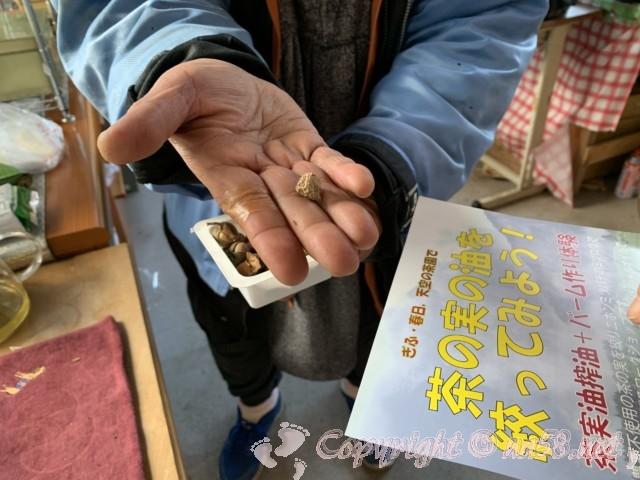 岐阜のマチュピチュ、天空の茶畑(岐阜県揖斐郡揖斐川町春日六合)の売店で、茶の実の油絞りについて