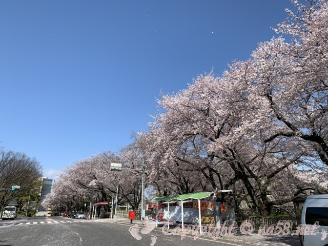 名古屋城正面の桜並木とバス停