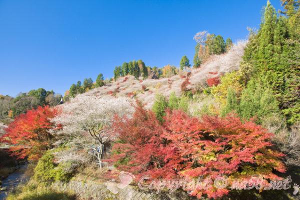 風光明媚な日本の田舎、桜など咲く風景