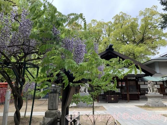 那古野(なごや)神社(名古屋市中区)の拝殿と藤