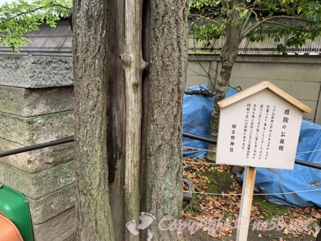 那古野神社境内にある、延命長寿の「公孫樹」