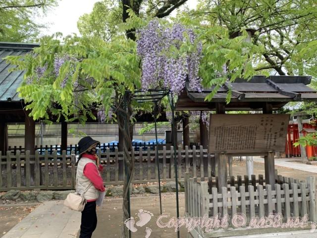 那古野(なごや)神社(名古屋市中区)の藤と藤棚