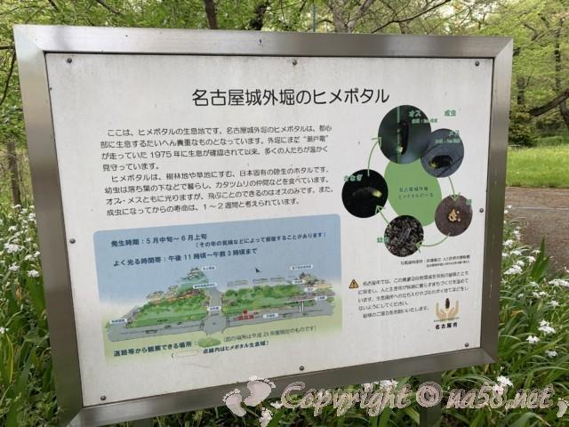 名古屋城外堀で見られるヒメボタル、蛍・ホタルの生息について
