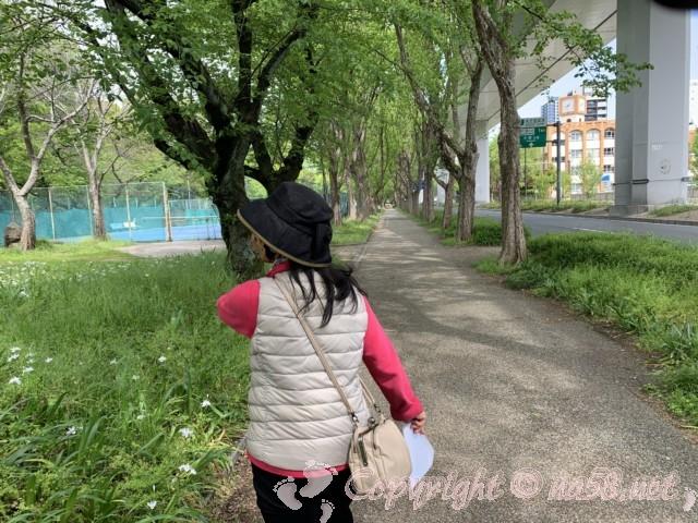 名古屋城外堀、ヒメボタル発生地区お左に見るところ(名古屋市中区)名古屋高速都心環状線