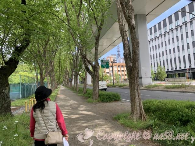 名古屋城外堀、ヒメボタル発生地区お左に見るところ(名古屋市中区)右手が呉服町通り