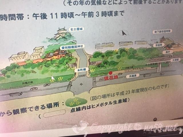 名古屋城外堀で見られるヒメボタルの生息地