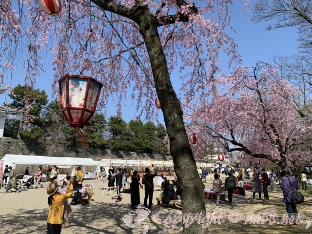 名古屋城の桜まつり イベント会場とまつり提灯
