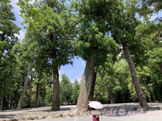 伊勢外宮、三重県伊勢市、正宮の右側の敷地と大木