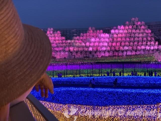 なばなの里イルミネーション2020年6月「さくら」千本桜と里山の情景
