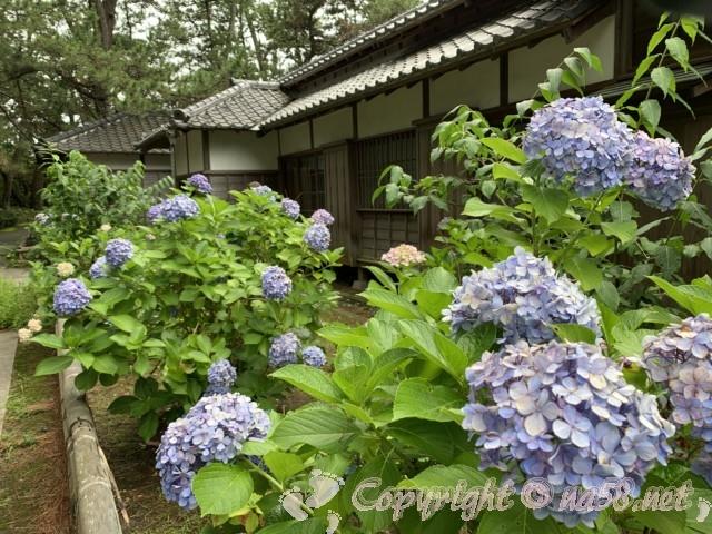 沼津御用邸記念公園(静岡県沼津市)の西付属邸とあじさい