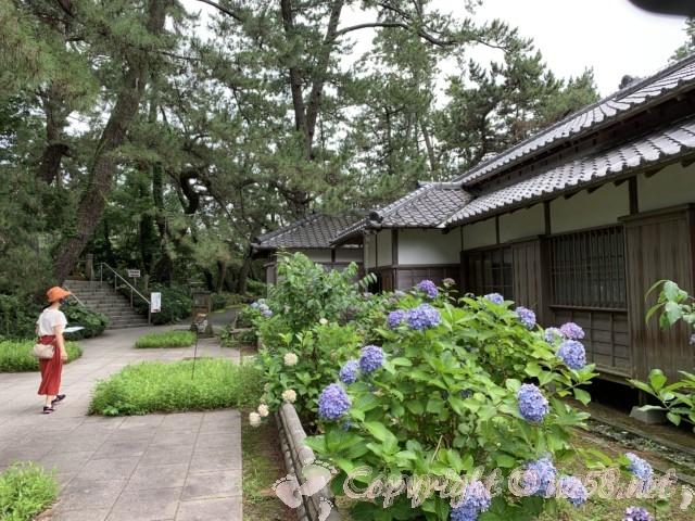 沼津御用邸記念公園(静岡県沼津市)の西付属邸を彩るあじさい