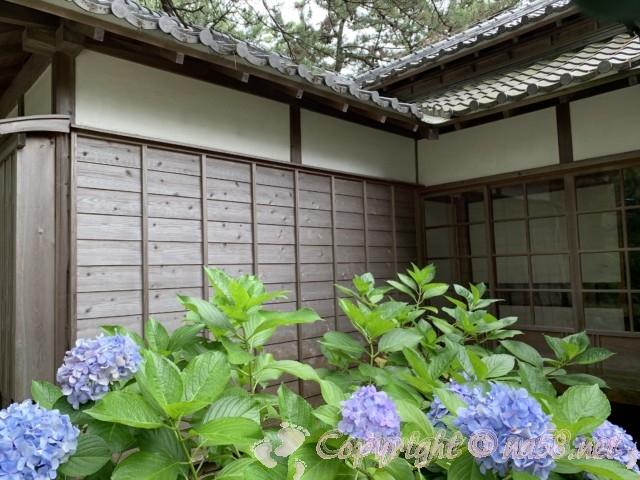 沼津御用邸記念公園(静岡県沼津市)の西付属邸の中庭にあるあじさい