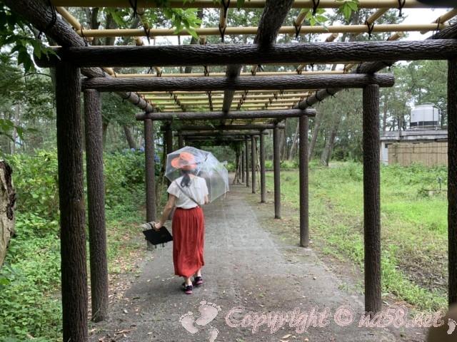 沼津御用邸記念公園(静岡県沼津市)の藤棚と付近のあじさい