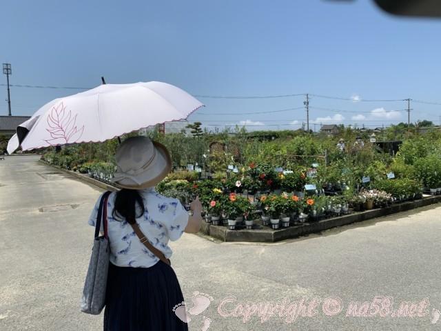 愛知県西尾市「憩いの農園・バラ園」農園の内部広々