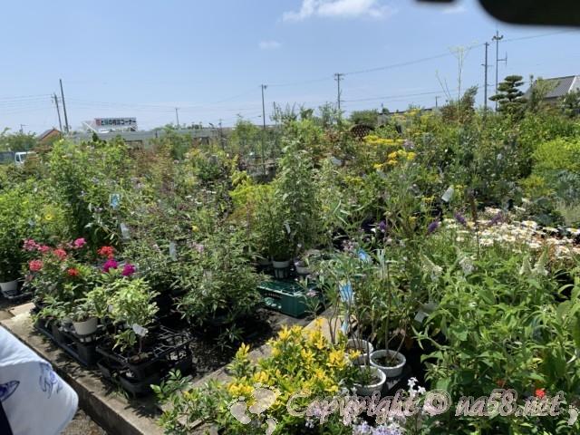 愛知県西尾市「憩いの農園・バラ園」花きのコーナー