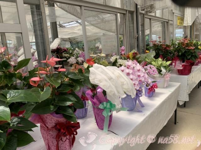 愛知県西尾市「憩いの農園・バラ園」温室内の美しい花々