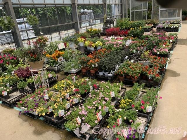 愛知県西尾市「憩いの農園・バラ園」温室内の美しい花