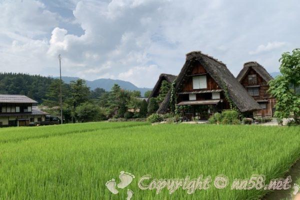 「萩町合掌造り集落」(岐阜県白川村)緑色の田と合掌造りの家