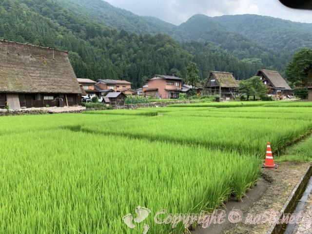 「萩町合掌造り集落」(岐阜県白川村)集落の風景