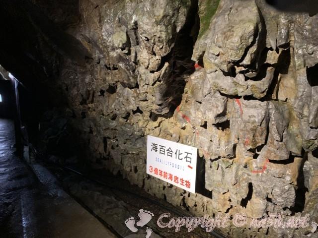 「飛騨大鍾乳洞」岐阜県高山市・鍾乳洞の中、海生物の化石