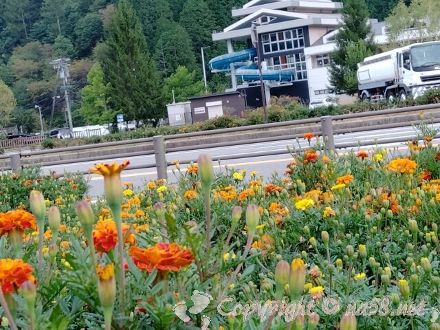 道の駅信州平谷、信州平谷温泉ひまわりの湯に併設のプール